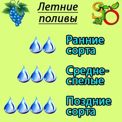 нужно ли поливать виноград