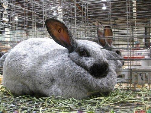 Выгодный кролик