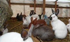 Кролики: полезная информация о содержании