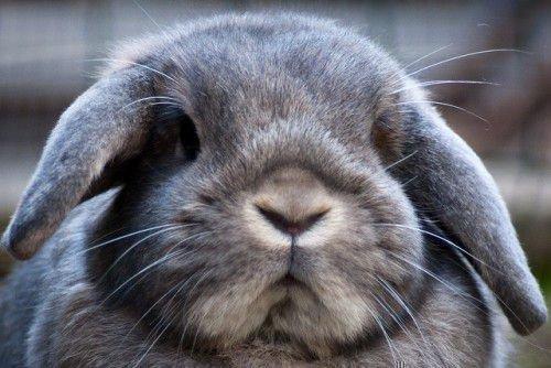 Кролики с человеческими именами