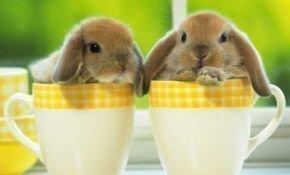 Как правильно организовать уход и кормление декоративных кроликов