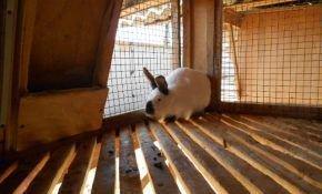 Чем очищать и дезинфицировать кроличьи клетки?