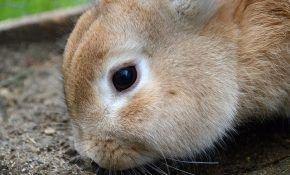 Лечим кролика от поноса
