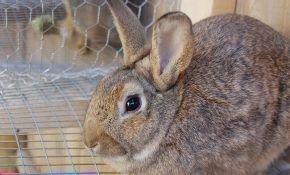 Как можно сделать своими руками клетку для кроликов