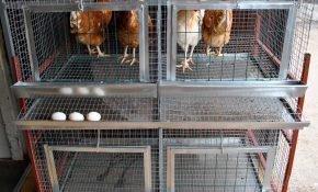 Как построить клетки для содержания кур самостоятельно?