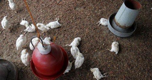 H5N1 самый опасный вирус