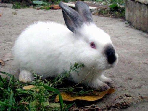 Крольченок