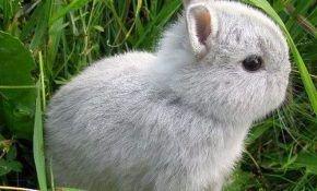 Описание карликовых пород кроликов