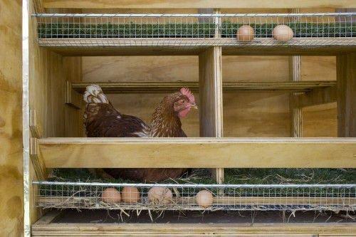 Клетка с яйцесборником