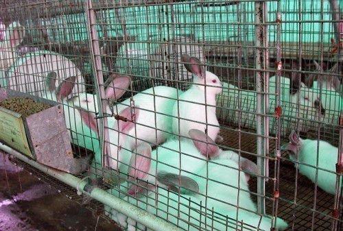 Клетки с кроликами