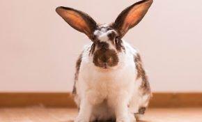 Имя для кролика: надо ли придерживаться правил