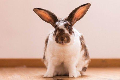 Кличка для кролика