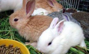Комбикорм для кролика: свойства, состав, дозировка