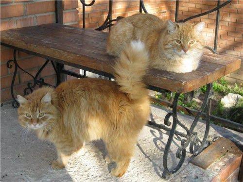 Коты - древние защитники