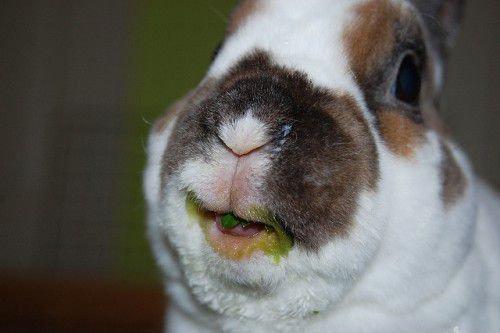 Кролик есть зелень