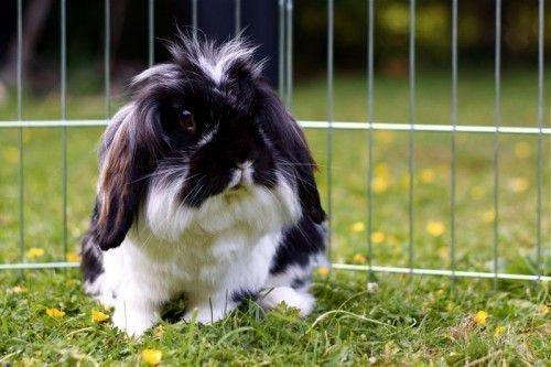 Кролик и трава