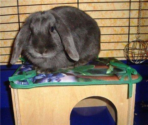 Кролик и игрушка