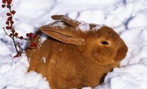 Преимущества содержания кроликов на улице в зимний период
