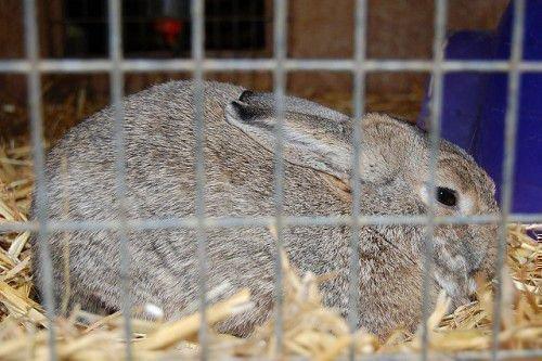 Кроликам нужно сено