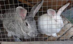 Разведение кроликов как бизнес: планирование и расчеты