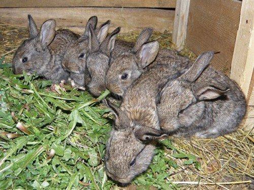 Кролики копают ямы