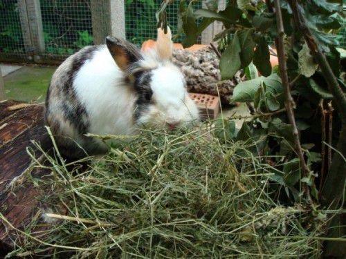 Кролики любят сено