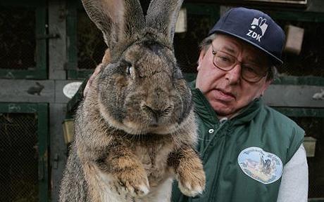 Крупные кролики