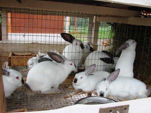 Кролики на балконе
