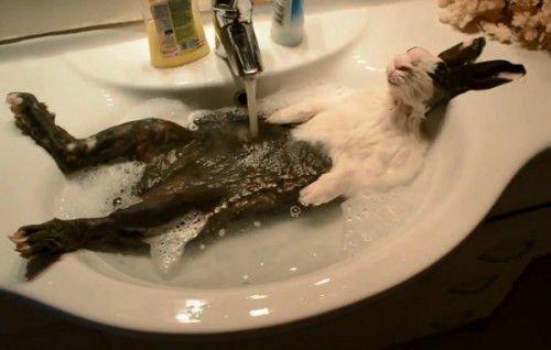 Кролики не любят мыться