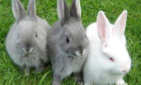 Кролики: распространенные болезни