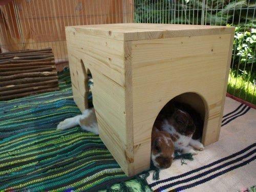 Кролики в домике