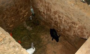 Что такое ямное разведение кроликов?