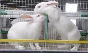 Кролиководство – выгодный бизнес