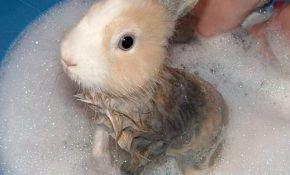 Можно ли купать декоративного кролика