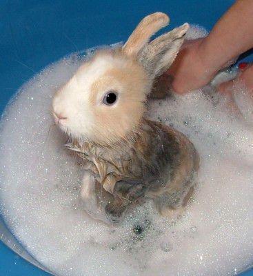 Купание кроликов