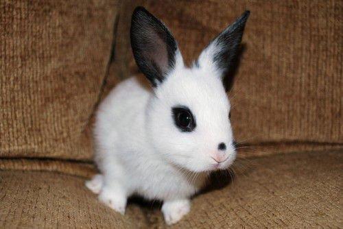 Лечение декоративного кролика