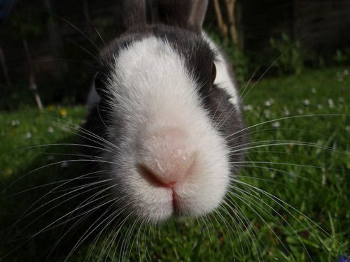 Любопытный кролик