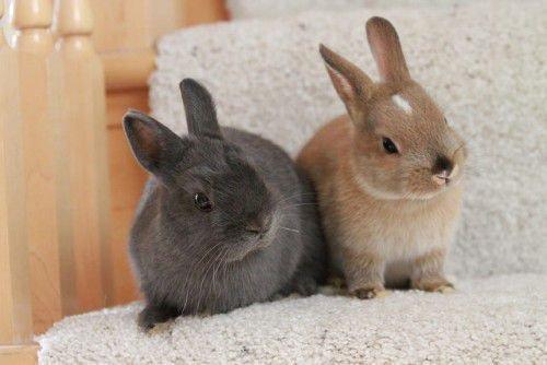 Маникюр для кроликов