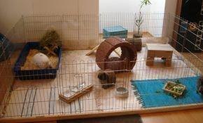 Декоративные кролики и их игрушки