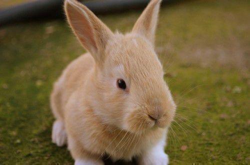 Новый кролик