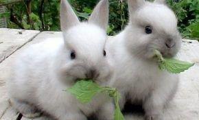 Домашние кролики: чем кормят и каким кормом