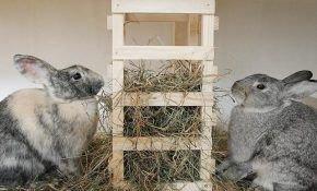 Чем лучше всего кормить кроликов?