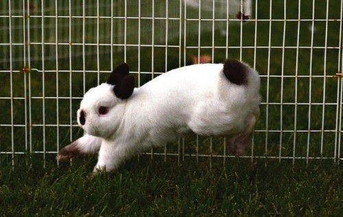 Подвижный кролик