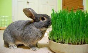 Травы для кормления кроликов: какие можно давать, какие – нет
