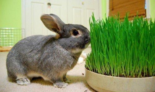 Полезная трава
