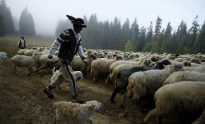 Обзор овцеводства в мире: тенденции и перспективы отрасли