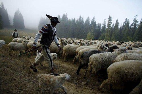 Как выглядят пастухи в разных странах