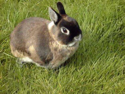Предок кролика