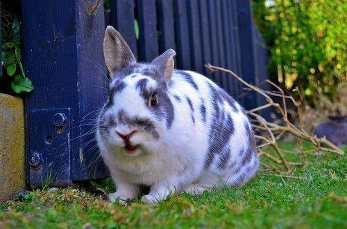 Проблема плодовитости кроликов