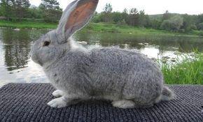 Как правильно забить кролика в домашних условиях?